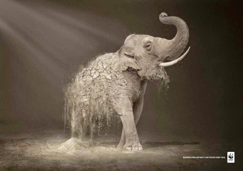 WWF Print Ad Elephany